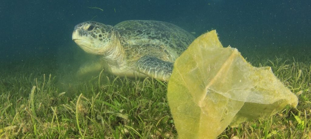 Environmental-problem-plastic-ocean-turtle