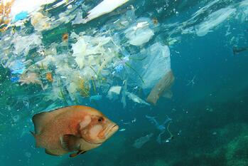 Fish-and-plastic-pollution-microplastics